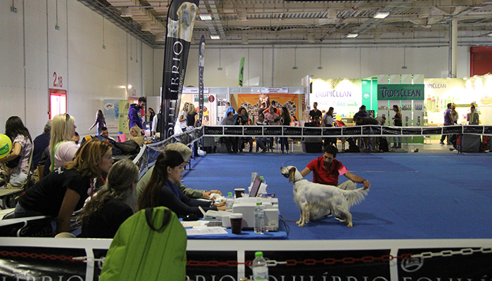 Here during international dogshow in Greece